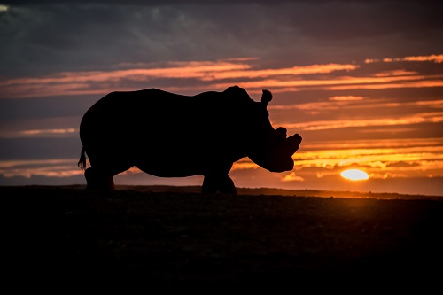 Rhino Home Screen Gallery